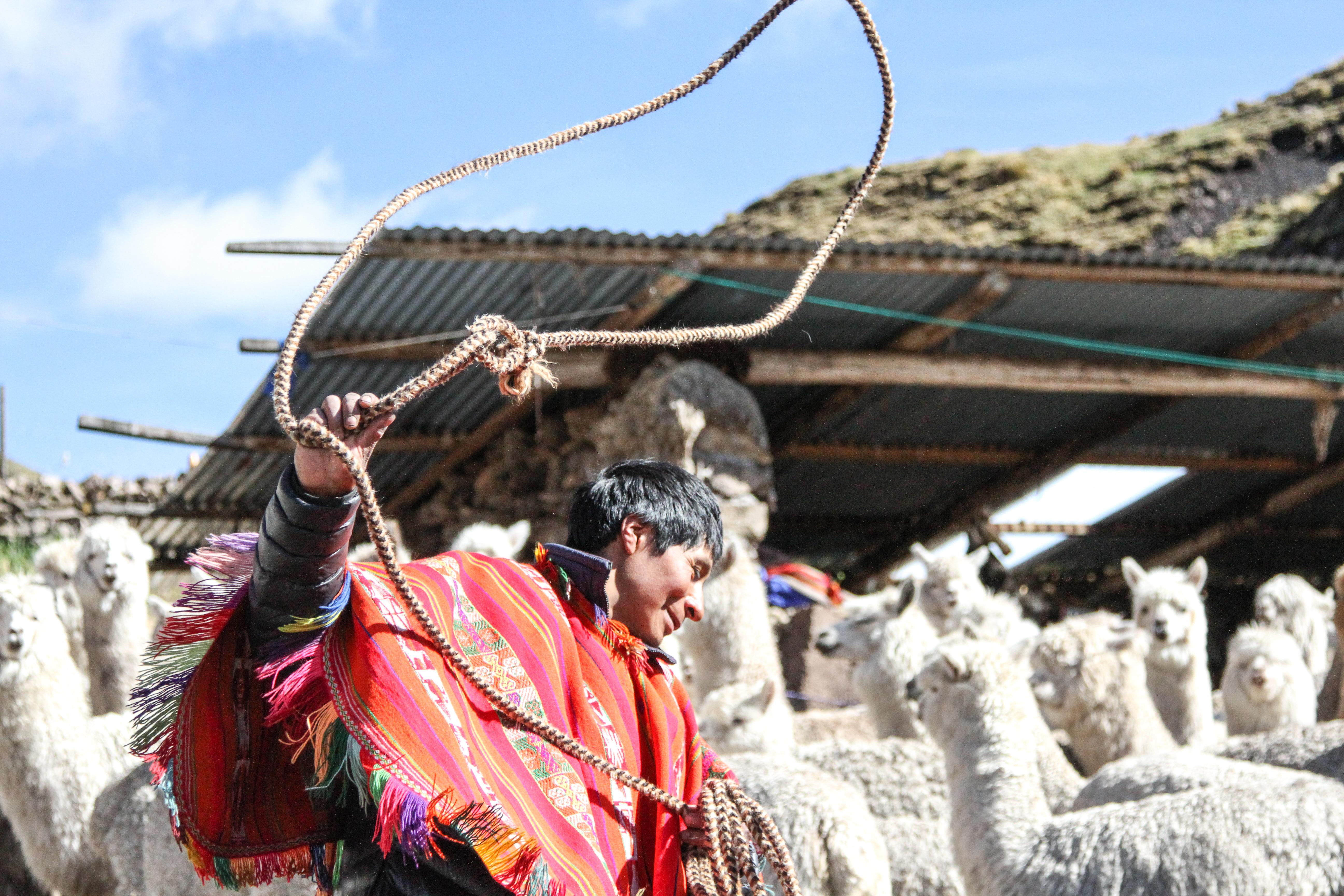 Nest_Peru_Sacred Valley_Alpaca Herder Shearing_Artisans